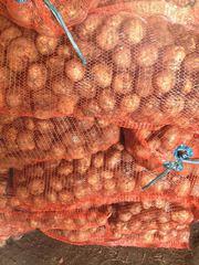 Картофель Невский от 20 тонн в Кемерово