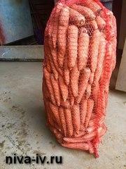 Оптовая и розничная продажа моркови от производителя
