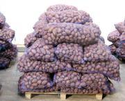 Картофель продовольственный (5+) оптом от производителя 14р/кг