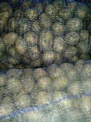 Оптовая продажа картофеля